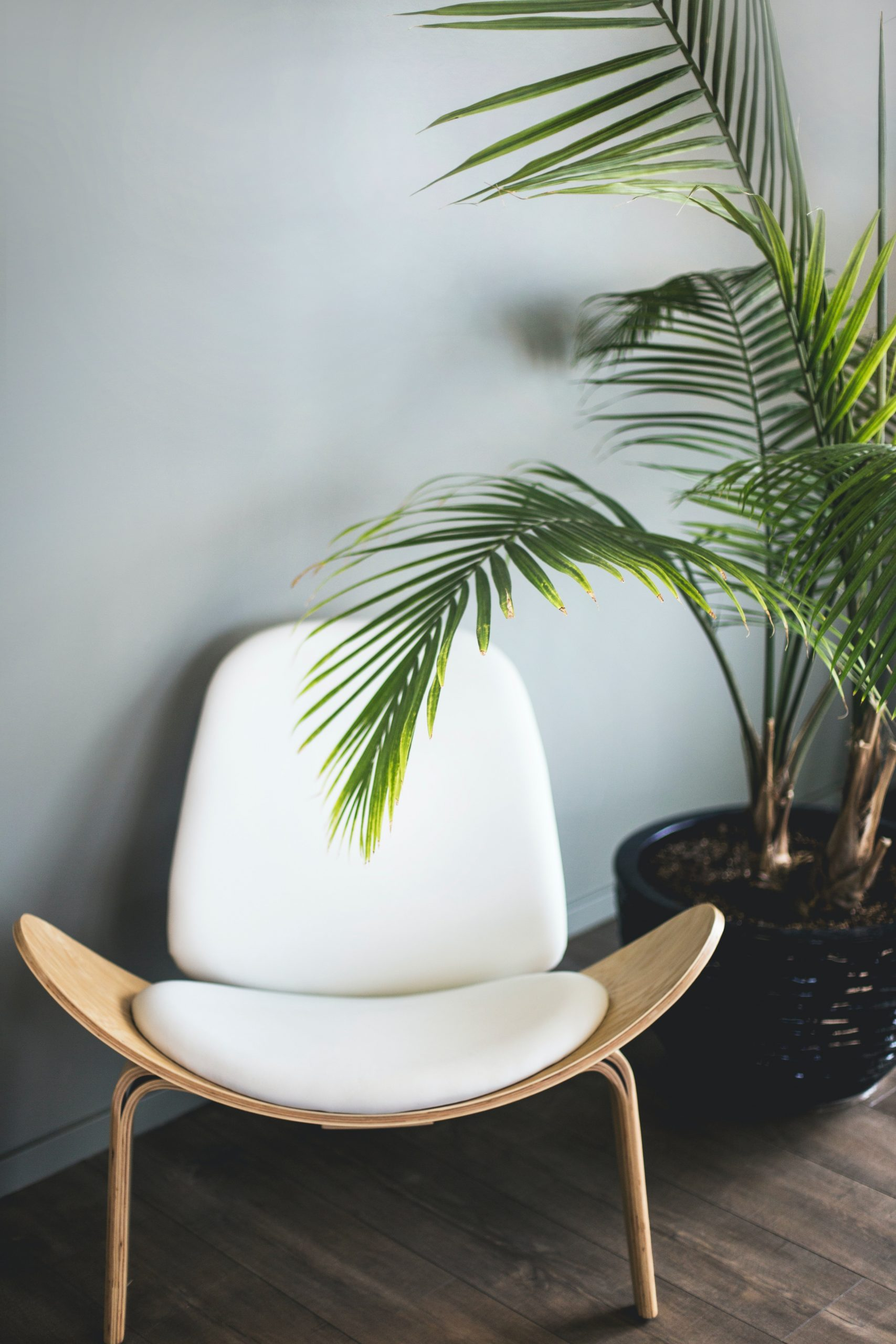 brown wooden chair beside plant